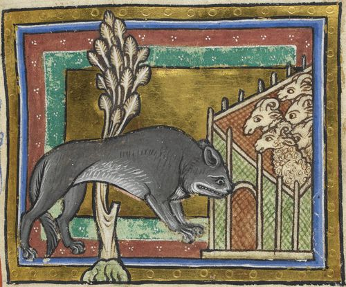Detail of a miniature of a wolf in a medieval bestiary