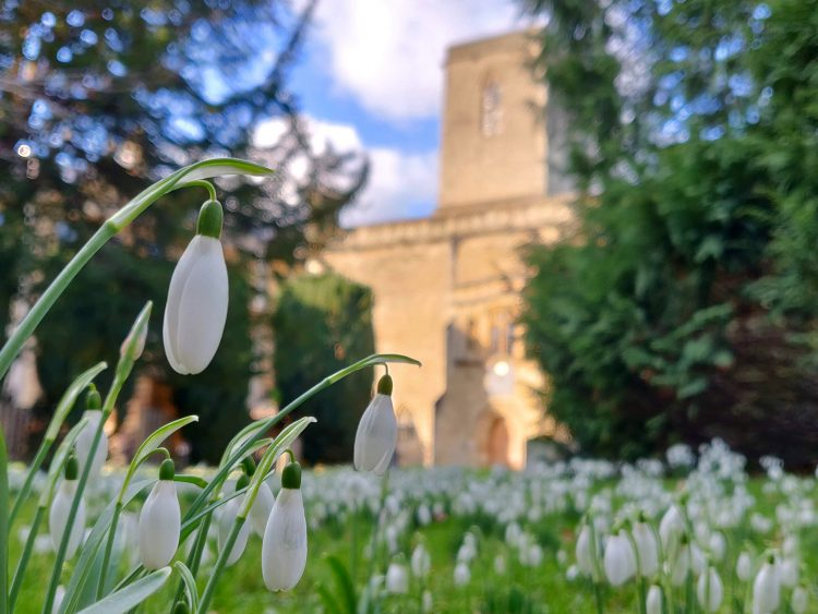 Snowdrops in the College churchyard