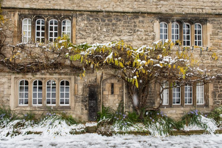 The wisteria in the Front Quad, in the snow